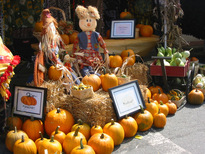 image pumpkins for sale anson county nc